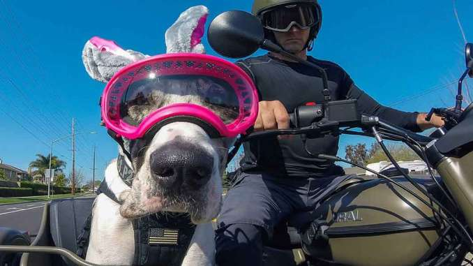 Waffles the Sidecar Dog - One Dog's Great Life on the Road